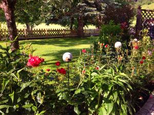 Blick auf Garten mit Blumen