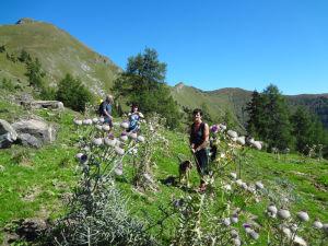 Wanderung Grubereck Diesteln